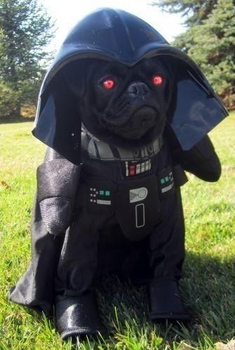 darth dog I want.