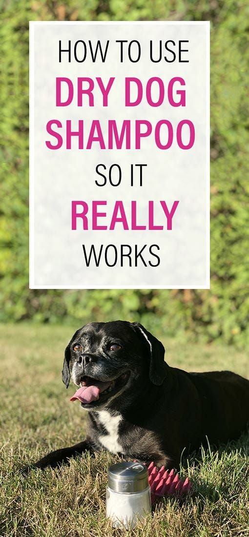 Dry Shampoo For Dogs Is All The Rage But Does It Really Get Your Dog Clean We Re Chatting About How Dry Shampoo Work Dry Dog Shampoo Dog Shampoo Dog Cleaning