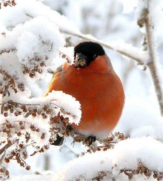 так вырастать постепенно сад ледяной узор красив снежный окно на: 10 тыс изображений найдено в Яндекс.Картинках: