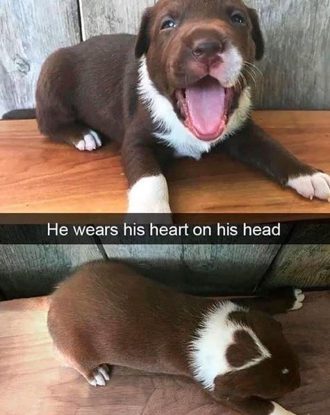 He Wears His Heart On His Head Animal Memes Clean Animal Memes Love You Funny Quotes