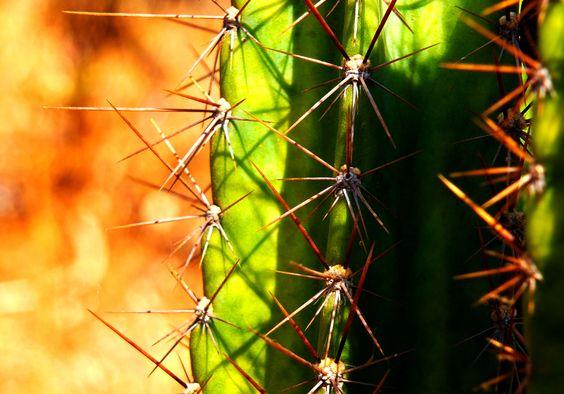 Cactus - ClaraAuer