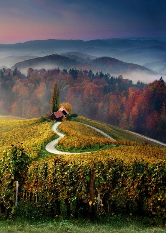 Escapade romantique dans les vignes… :
