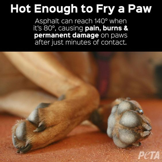 If the pavement is too hot for your hand, it's too hot for Fido's feet.