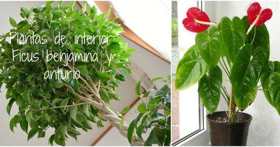 Descubre las 2 plantas de interior m s f ciles de cuidar for Nombre de plantas de interior