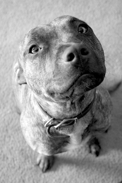 bullysmiles: maybelle sitting by Megan Finley on Flickr