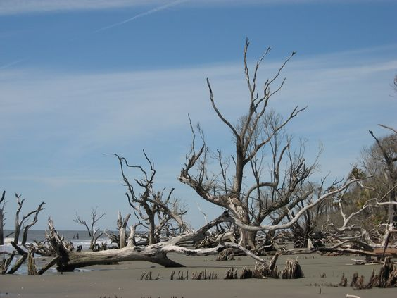 Boneyard beach bulls island
