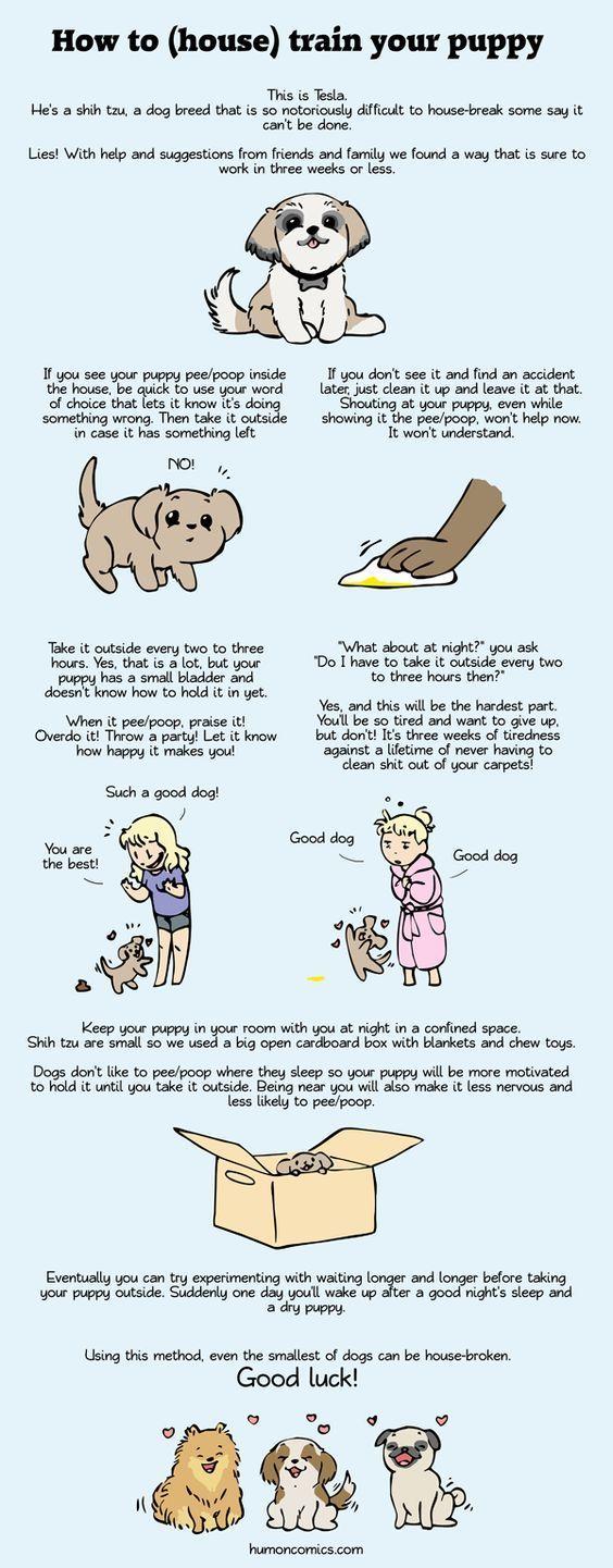 Dog Behavior Training To Housebreak Your Puppy Puppy Potty Training Potty Training Puppy Puppy Training Training Your Puppy
