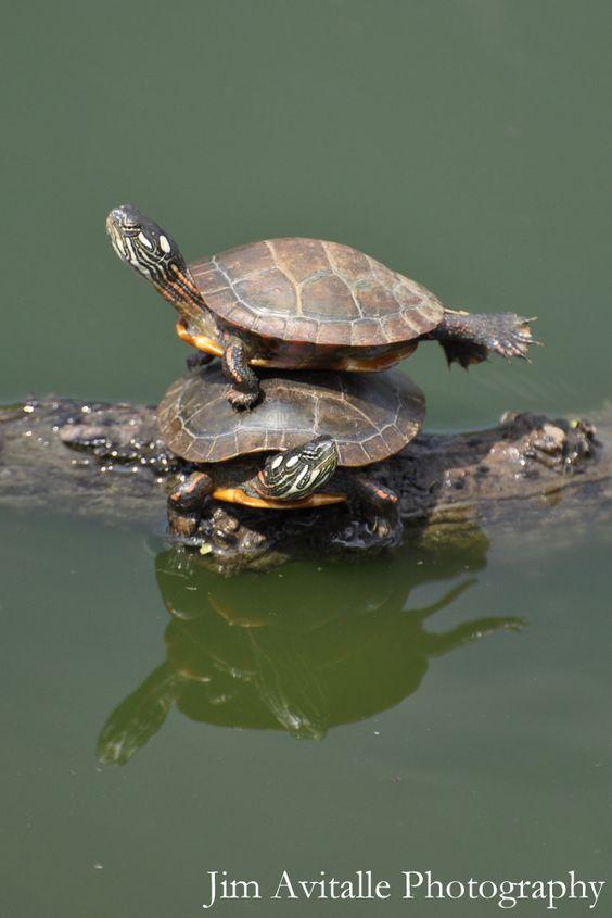 Cirque de Turtle...@Autumn Marshall
