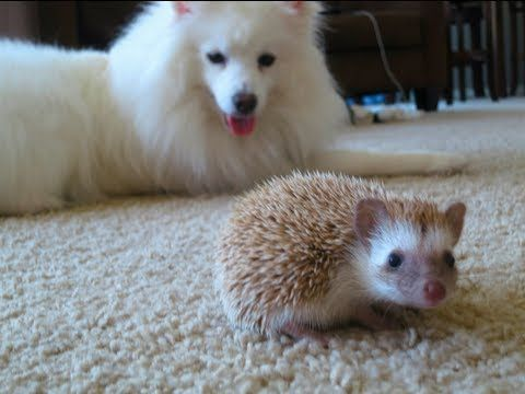 The Most Adorable Pet Friendship Video Ever: