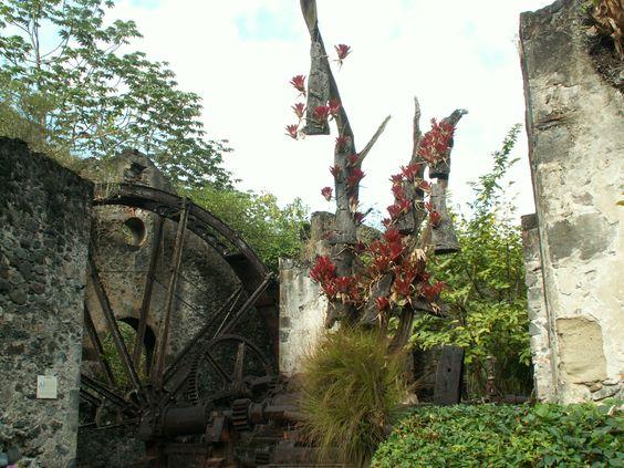 Martinique, jardin botanique du capitaine Latouche, Le Carbet. Dans les ruines d'une usine sucrière. Même créateur que le jardin de Balata (Thosé) , plus petit mais beaucoup plus original.  Photo F Bertel 2010