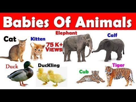 27+ Baby animal name of tiger information