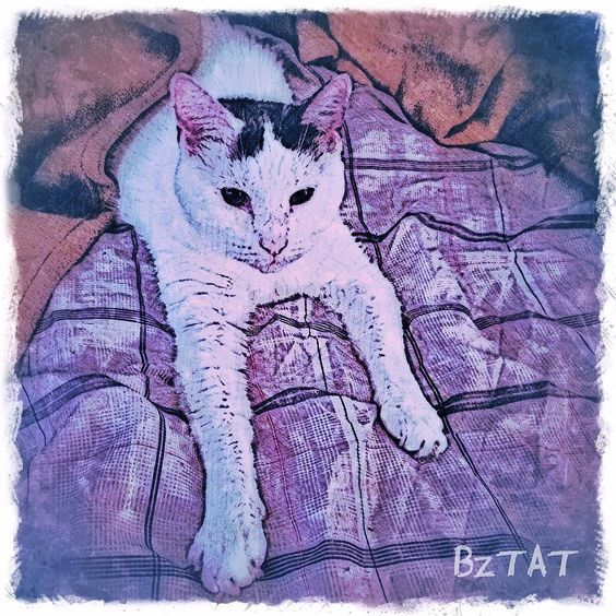 Undercover Okey. (Get a custom portrait of your pet at www.bztatstudios.com.) #Okey #cats #catsofinstagram #catart #artcat #custompetportrait #digitalart #iphonegraphy #digital #bztatart