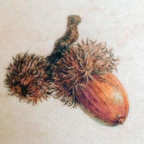 Turkey Oak Acorn on Vellum. Acorns are great subjects when you're learning to paint on vellum, small subjects are best ant the variation in texture allows you to try different watercolour techniques, including wet-on-dry and drybrush  #turkeyoak#acorn#botanicalartist #myart #watercolour #botanicalart #botanicalpainting#beginner#tutorial#oaktree#squirrel#food#autumn#vellum#diannesutherland #watercolourtechniques#drybrush