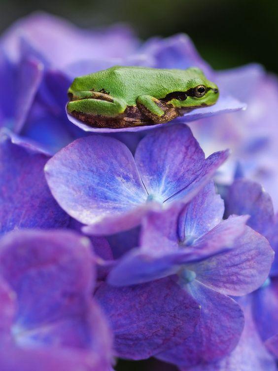 On the flower by Haru Jm7kiv