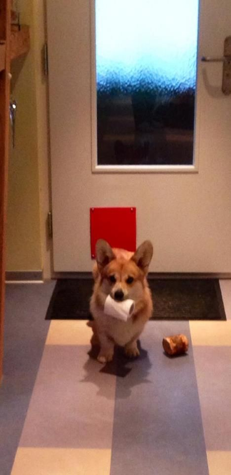 The latest in corgi toilet paper holders Z