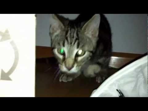 Cat Crash - Katze rennt in die Kamera