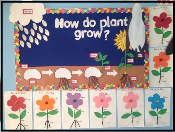 Plants bulletin board idea life cycle of a plant A very