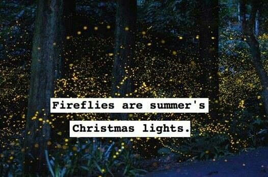 Fireflies are summer's Christmas lights.: