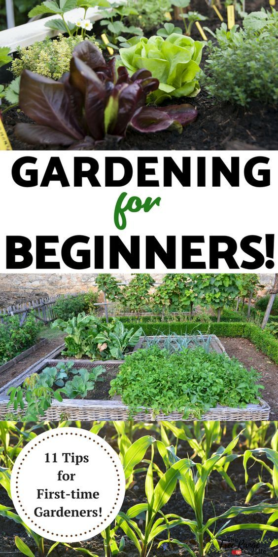 Gardening For Beginners 11 Tips For A Successful Start With