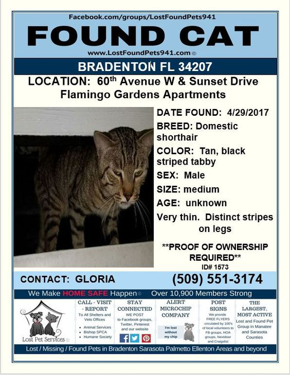 Do you know me? #FoundCat #Lost #Cat #Tabby #Bradenton FL - lost pet poster