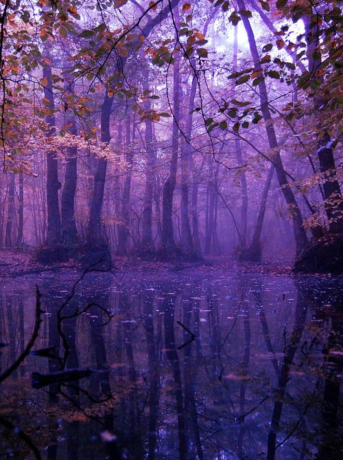 Mystic purple landscape | Violet trees | Trespassing in the fairy forest