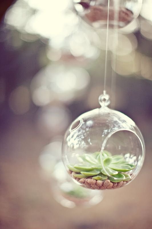 hanging glass orbs with succulents