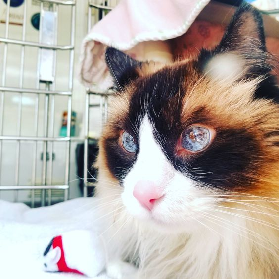 This Cat At The Mobile Humane Society In Seattle Had The Most Beautiful Eyes Animals Beautiful Cuddly Animals Beautiful Cats