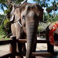 PODCAST Indonésie - Ep. 01 - Bali, 24 Heures Magiques Avec Les Éléphants by Daniela Clape on SoundCloud