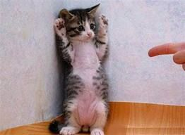 Hands Up Your Busted!  http://www.facebook.com/DailyFreebies?ref=stream