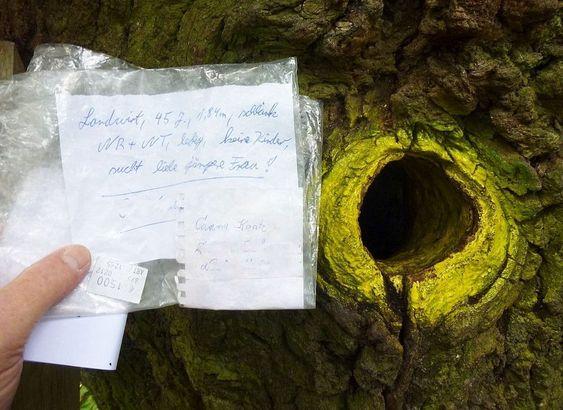 Η Οξιά της οδού Bridegroom: Το μοναδικό δέντρο με το δικό του ταχυδρομικό κώδικα