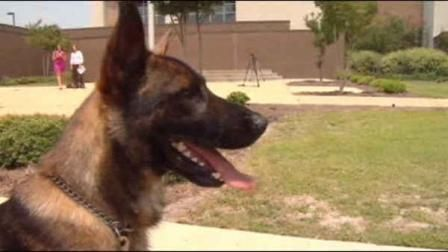 Police dog in North Carolina attacked in the line of duty | 7online.com