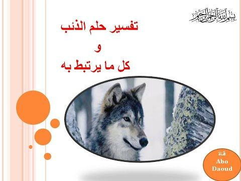 تفسير حلم الذئب Youtube In 2020 Dogs Animals Husky