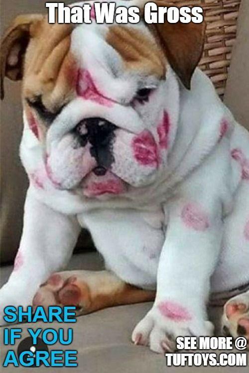 Funny Dog Memes Part 1 Cute Bulldog Puppies Bulldog Puppies