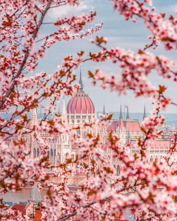 It's Springtime in Budapest! 🌸