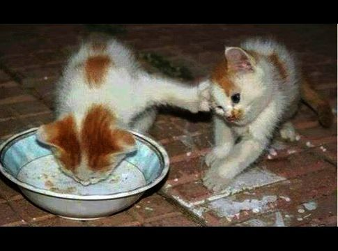 Cool Cute Cats For Sale In Karachi Excellent Funny Animals Kittens Cutest Cats