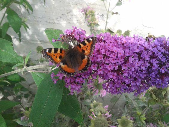 mooie vlinder op een bloem.