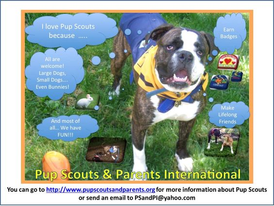 Pup Scout and Parent Poster Contest on WHY I LOVE PUP SCOUTS   LOUIE  http://www.pupscoutsandparents.org/ http://www.pupscoutsusa.com/