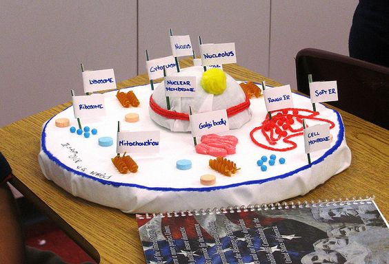 INEDIBLE CELL PROJECT by Florida Science, via Flickr
