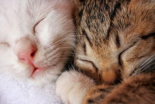 awww cat nap :) なかよしさん