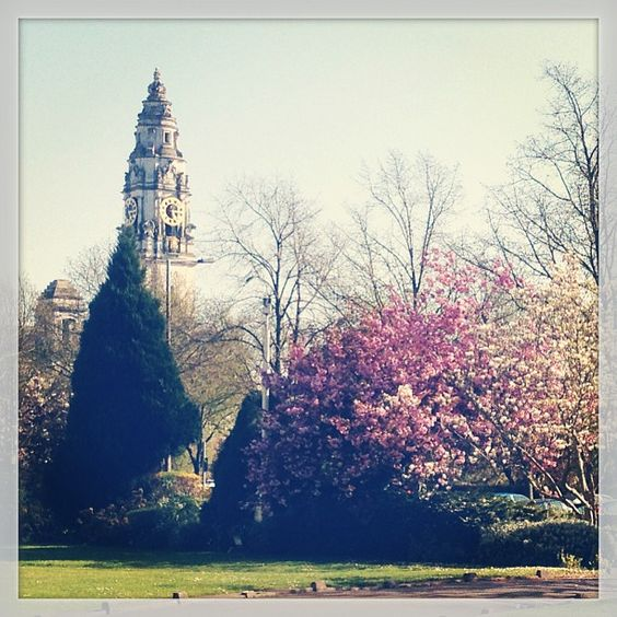 Cherry tree blossoms, and City Hall, from Main Building, Cardiff.