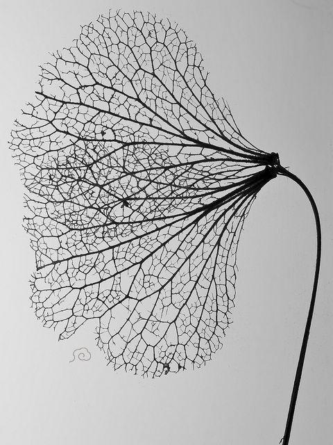 Ne peut se flétrir  qu'une fleur  qui s'est épanouie.