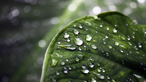 Nature, Searching And Rain