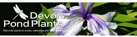 Native British Pond Plants - UK water plants for sale