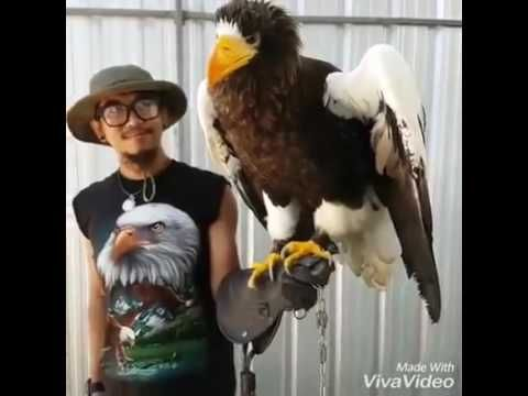 what does a golden eagle sound like