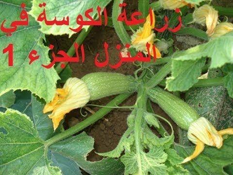 زراعة القرع الاخضر او الكوسة في المنزل الجزء 1 Planting Green Pumpkin Or Garden Vegetables Stuffed Peppers