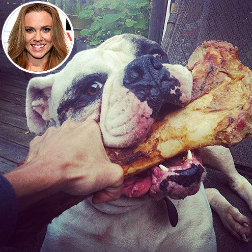U.S. swimmer Natalie Coughlin's 3-year-old Bulldog, Dozer, has a bone to pick!