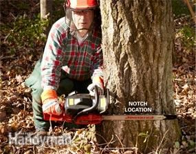 How to Cut Down a Tree and  make it fall where you want it