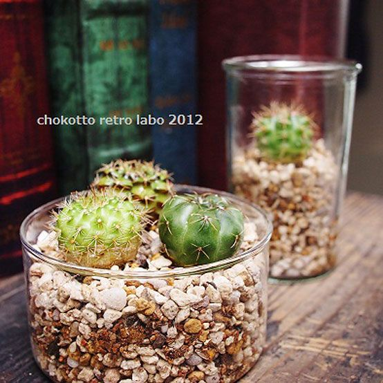 Can Succulents Be Planted In Gravel Gardens The O 39 Jays