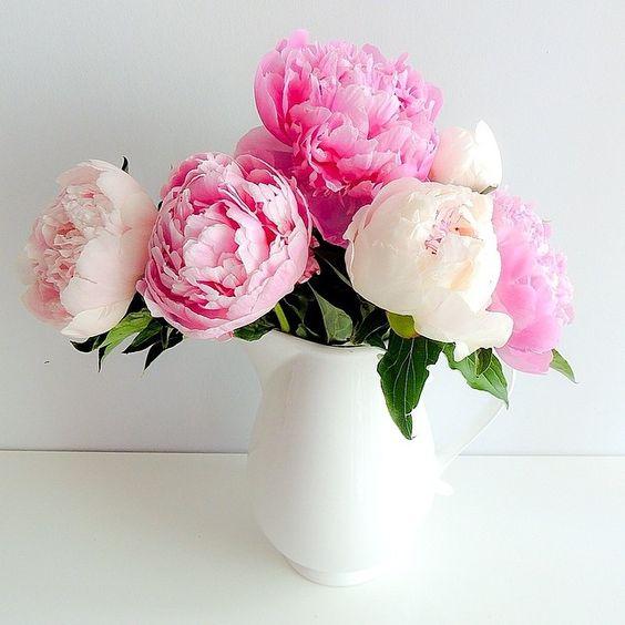 Gorgeous Flowers Floral Frenzy Pinterest Flower