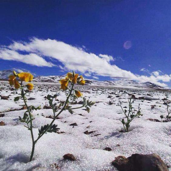 Estos días de primeros de Junio que estamos padeciendo temperaturas más altas de lo normal, en el desierto más seco del Planeta, el de Atacama en Chile, ¡ha nevado!
